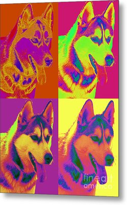Pop Art Siberian Husky Metal Print by Renae Laughner