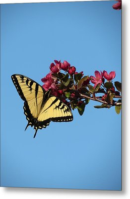Swallowtail Butterfly Metal Print by Rebecca Overton
