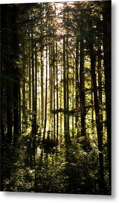 Untitled Metal Print by Kimberly Deverell