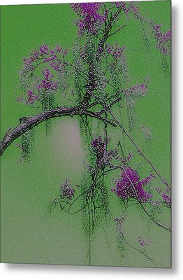 Metal Print featuring the photograph Wisteria by Holly Martinson