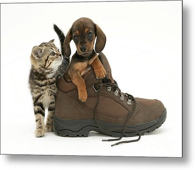 Kitten And Puppy Metal Print by Jane Burton