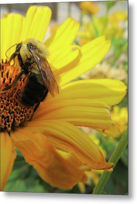Bee Metal Print by Michele Caporaso