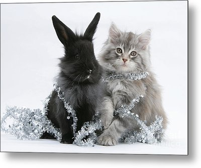 Kitten And Rabbit Getting Into Tinsel Metal Print by Mark Taylor