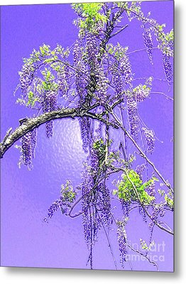 Metal Print featuring the photograph Purple Passion Wisteria by Holly Martinson