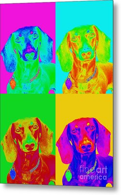 Pop Art Dachshund Metal Print by Renae Laughner