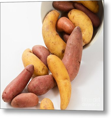 Potato Metal Print by Photo Researchers, Inc.
