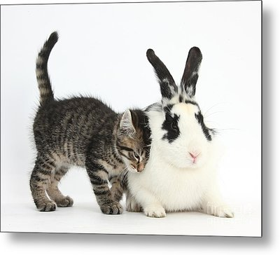 Kitten And Rabbit Metal Print by Mark Taylor