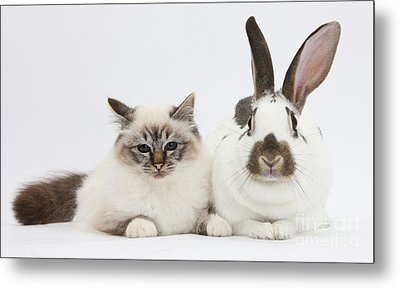 Tabby-point Birman Cat And Rabbit Metal Print