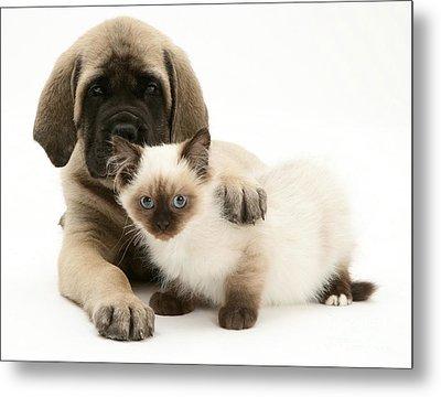 Puppy And Kitten Metal Print by Jane Burton