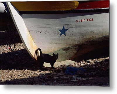 A Black Cat Stands Next To The Bow Metal Print by Medford Taylor
