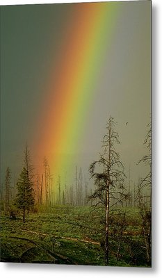 A Brilliantly Colored Rainbow Ends Metal Print by Norbert Rosing