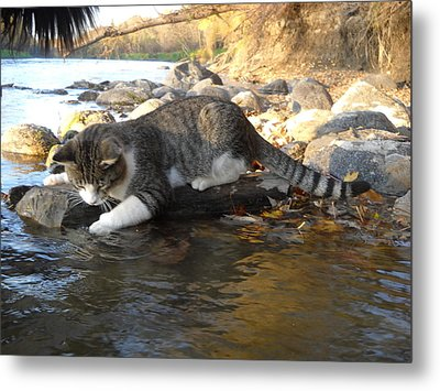 A Cat Goes Fishing Metal Print