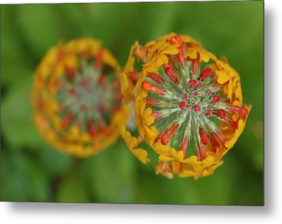 A Close Up View Of Flowering Stalks Metal Print by Darlyne A. Murawski