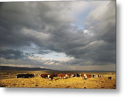 A Cloud-filled Sky Over A Yakima Valley Metal Print by Sisse Brimberg