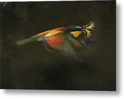 A Female Bee Eater Plucks A Butterfly Metal Print