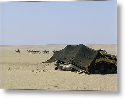 A Herd Of Camels Heading Metal Print by W. Robert Moore