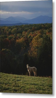 A Horse Stands On A Hill Overlooking Metal Print by Sam Kittner