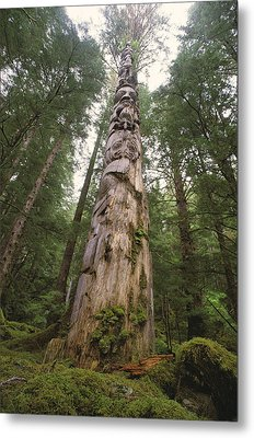 A Large Totem Pole Stands Amid Tall Metal Print by Bill Curtsinger