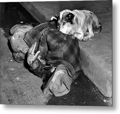 A Loyal Chicago Dog Named Queenie Metal Print by Everett