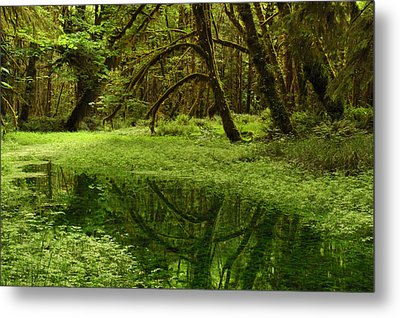A Meadow Inside The Quinault Valley Metal Print by Darlyne A. Murawski