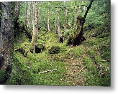 A Mossy Woodland View On Queen Metal Print by Bill Curtsinger