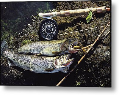 A Pair Of Cutthroat Trout, Salmo Metal Print