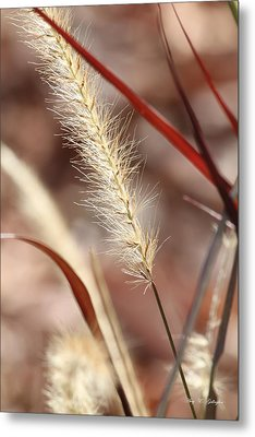 Metal Print featuring the photograph A Whisper In The Wind by Amy Gallagher