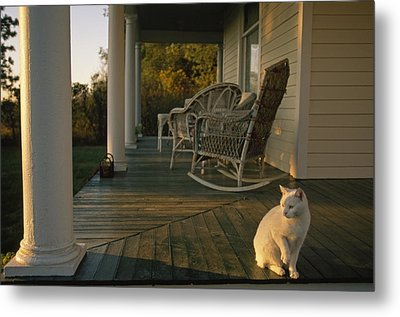 A White Cat In Sunlight On A Columned Metal Print by Joel Sartore