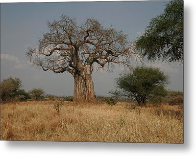 African Baobab Tree In The Tarangire Metal Print by Gina Martin