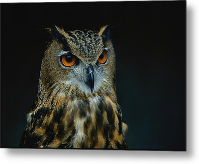 African Eagle Owls Are Among The 200 Metal Print by Joel Sartore
