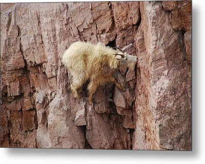 Alone On The Rocks Metal Print