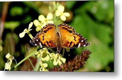 American Painted Lady I Metal Print by Bruce W Krucke
