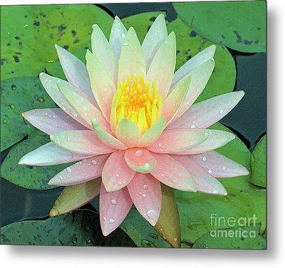 American Water Lilies Nine Metal Print