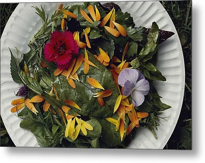 An Edible Salad At The Tilth Harvest Metal Print by Sam Abell