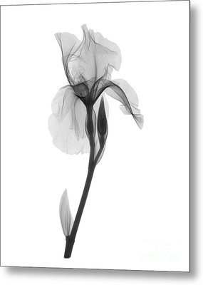 An X-ray Of An Iris Flower Metal Print