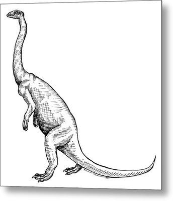 Anchisaurus - Dinosaur Metal Print by Karl Addison