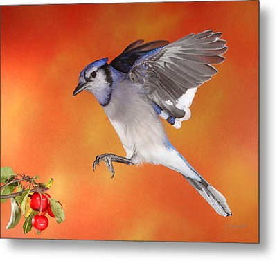 Metal Print featuring the photograph Apple Thief by Gerry Sibell