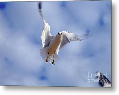 Metal Print featuring the photograph Applying Brakes In Flight by Clayton Bruster