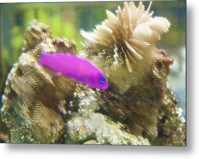 Aquarium Art 23 Metal Print by Steve Ohlsen