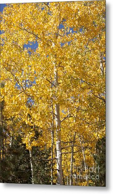 Metal Print featuring the photograph Aspen Gold by Marta Alfred