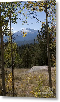 Metal Print featuring the photograph Aspens Around Pikes Peak by Marta Alfred