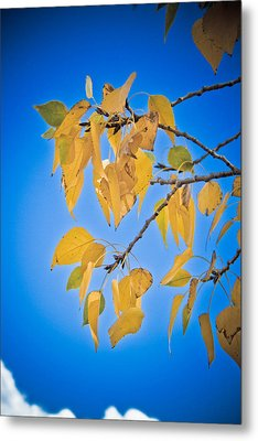 Autumn Aspen Leaves And Blue Sky Metal Print by James BO  Insogna