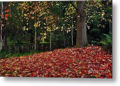 Autumn Colors Metal Print by Kaye Menner