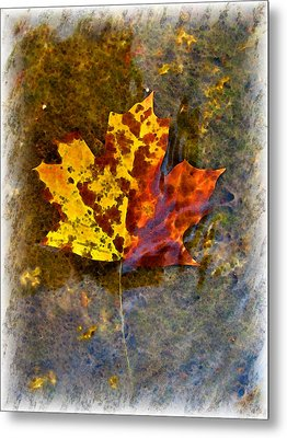 Metal Print featuring the digital art Autumn Maple Leaf In Water by Debbie Portwood
