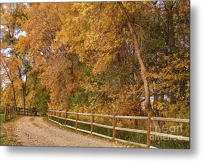 Autumn  Road To The Ranch Metal Print by James BO  Insogna