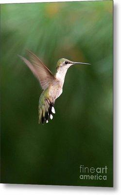 Awesome Hummingbird Metal Print by Sabrina L Ryan