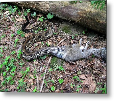 Metal Print featuring the photograph Bad Day In Squirrelville by Doug McPherson