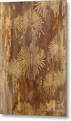 Bark Beetle Galleries Metal Print by Ted Kinsman