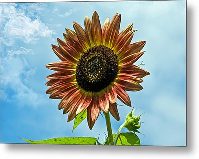 Metal Print featuring the photograph Beautiful Sunflower by Susan Leggett