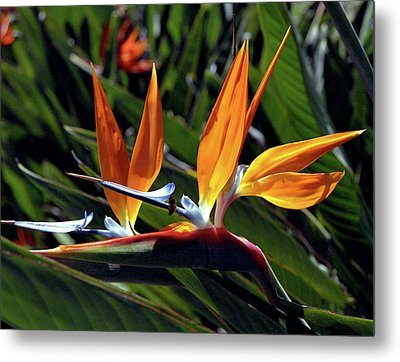 Bee And Bird Of Paradise Metal Print by Kevin Smith